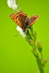 Macro photo de papillon