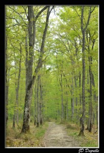 photo allée d'arbres en Sologne