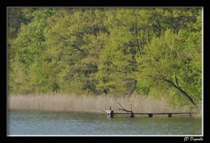photo étang de Sologne