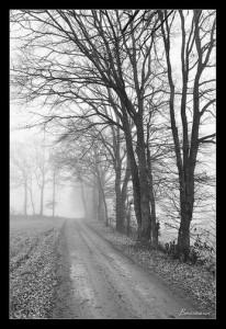 photo de chemin de forêt (stages photo St Etienne)