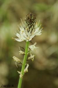 Photo de fleur prise pendant un stage photo nature après cours photographie