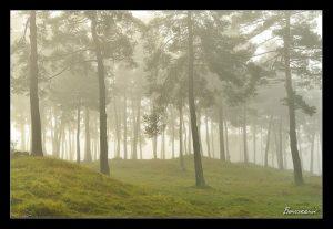 stages photo Auvergne