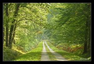 photo de forêt/ cours photographie Orléans